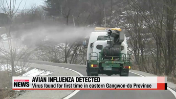 Avian Influenza detected for first time in eastern Gangwon-do Province