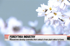 Researchers develop cosmetics from extract of rare plant native to Korea