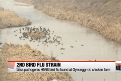 Korea confirms second strain of bird flu at poultry farm