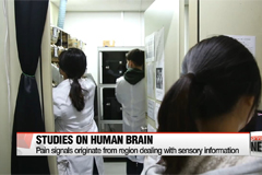 Local researchers solves mysteries concerning human brain