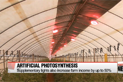 Farmers use supplemental lighting to enhance photosynthesis