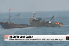 Amount of fish caught by Korean fishermen dropped to new low in 2016