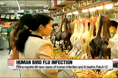 Chin reports rising number of human bird flu infections