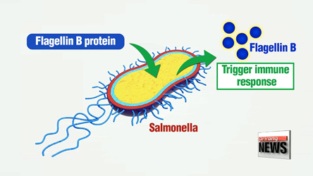 Korean scientists modify food poisoning bacteria to fight cancer
