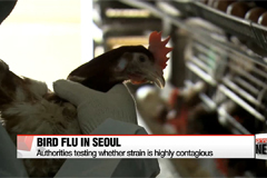 Bird flu virus found in goose near Han River in Seoul