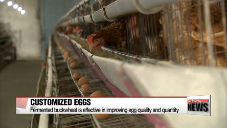 Researchers develop eggs effective in diet and mood control