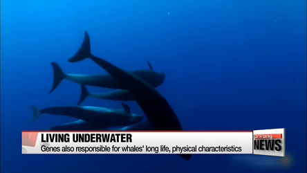 Korean researchers find genetic information behind how whales live underwater
