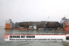 Remains found from Sewol-ho ferry turn out to be animal bones