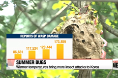 Warmer temperatures bring more insect attacks to Korea
