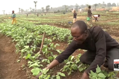7.7 mil. people in Dem. Rep. of Congo facing acute hunger due to rise in conflict: UN FAO