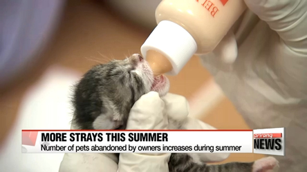 Number of stray animals spikes in summer...260 a day rescued this year