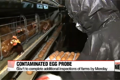 Government's additional probe into egg farms underway Sunday