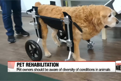 """""""Permanently disabled pets have a chance to walk again"""""""