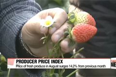 Producer prices up on surge on expensive agricultural produce