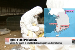 Avian flu found in wild bird droppings in southern Korea