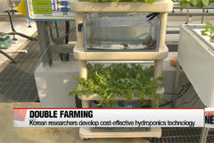 Korean researchers develop cost-effective hydroponics technology