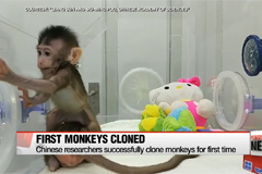 Chinese scientists successfully clone monkeys for first time