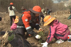 S. Korea plans to increase green space across the nation in time for Arbor Day