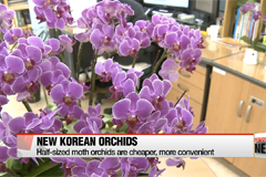 Korean orchid market blooms wi
