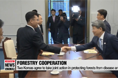 Two Koreas agree to cooperate on protecting forests against disease and pests