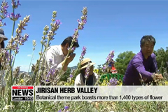 Jirisan Herb Valley attracts domestic travelers with various programs