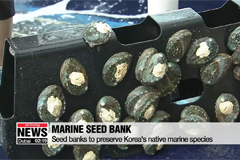 Seed banks to preserve native marine species in Korea