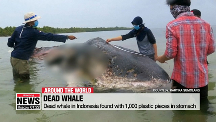 Sperm whale in Indonesia found with 1,000 plastic pieces in stomach