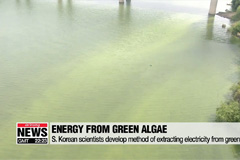 Local researchers produce electricity using green algae