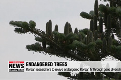 Korean researchers to revive e