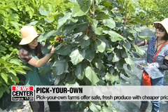 'Pick-your-own' farms offer sa
