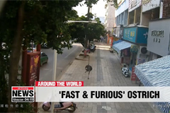 Ostrich runs through streets of China after being spooked by visitors