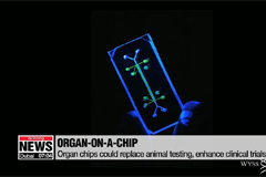 Organ chips could replace animal testing, enhance clinical trials