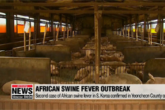 Second case of African swine fever confirmed in S. Korea