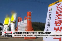 Two farms in Paju report a suspected case of African swine fever
