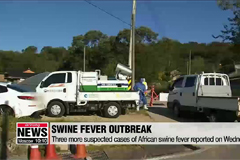 Three more suspected cases of African swine fever reported on Wed.: Agriculture Ministry