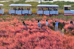 Autumn foliage in South Korea to peak from this weekend