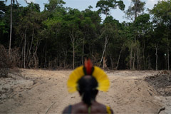 Deforestation in Brazilian Amazon has increased nearly 30% since August 2018: Report