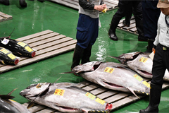 Blue fin tuna sold for US$ 1.8 mil. at first fish auction of year in Japan