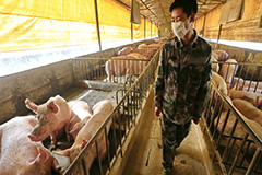 New swine flu with pandemic potential identified in China