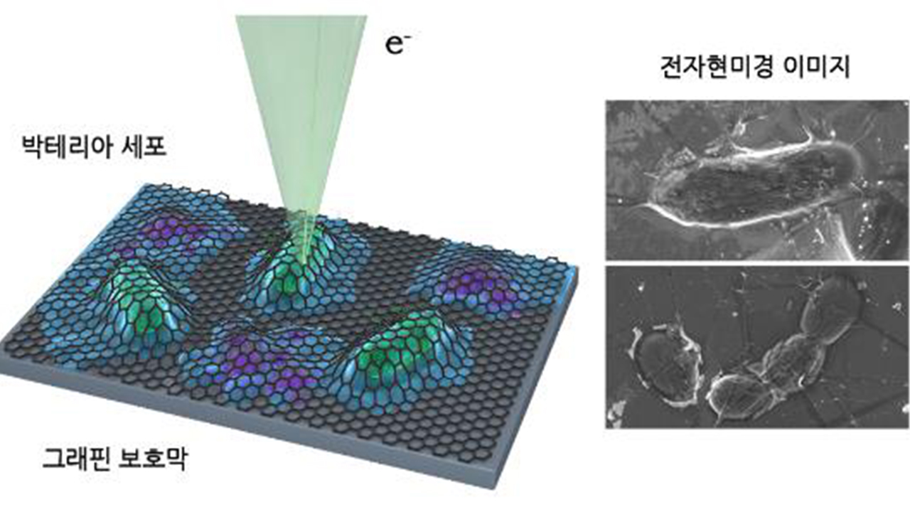 S. Korean researchers successfully observe live cells using electron microscope