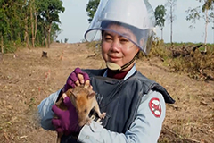 African giant pouched rat wins gold medal for sniffing out mines in Cambodia