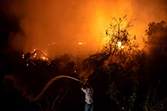Near 27% of Pantanal scorched from January-October 3rd: LASA