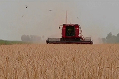 Argentina becomes world's first country to approve genetically modified wheat