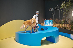 Exhibitions and performances to enjoy during the weekend; MMCA presents a museum for dogs