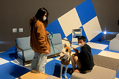 Nat'l Museum of Modern and Contemporary Art holds exhibition for dogs
