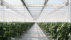 S. Korea's indoor farming tech