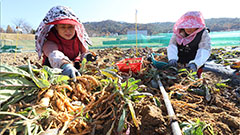 Population on S. Korean farms down 84% since 1970s