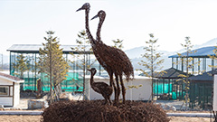 Winter life in DMZ: how red-crowned cranes survive cold