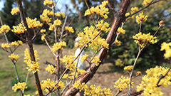 First spring flowers to bloom from mid-March in S. Korea