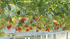 Smart farms emerge as new sect